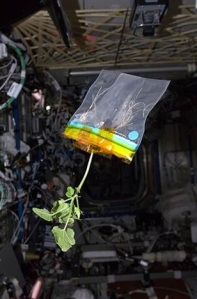 plant in space